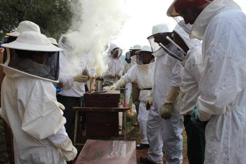 cursos apicultura en latiendadelapicultor